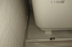 浴槽エプロン内側のカビ取り